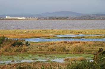6864.10 19-11-12--Saltmarsh-Pool-wi